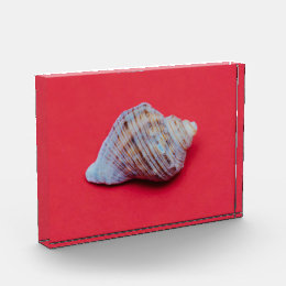 Seashell on a red background award