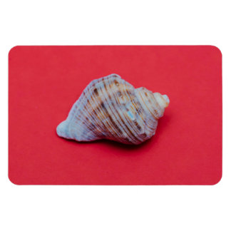 Seashell on a red background magnet