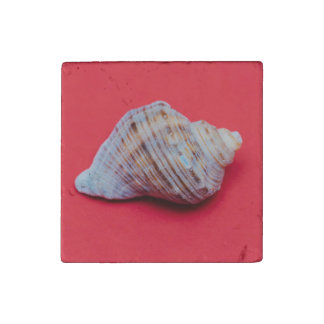 Seashell on a red background stone magnet