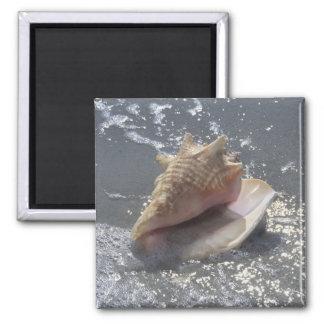 Seashell On Beach   Sanibel Island, Florida 2 Inch Square Magnet