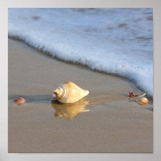 Seashell on sand posters