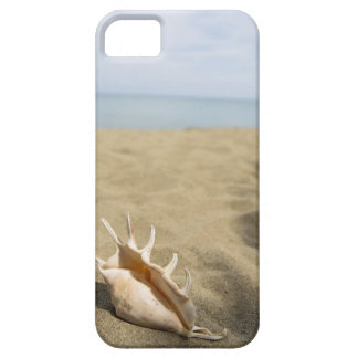 Seashell on sandy beach iPhone SE/5/5s case