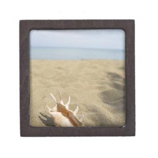 Seashell on sandy beach jewelry box