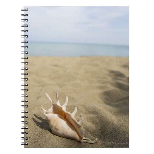 Seashell on sandy beach notebook