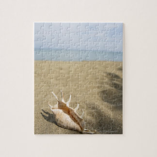 Seashell on sandy beach puzzles
