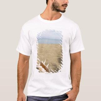 Seashell on sandy beach T-Shirt