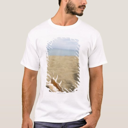 Seashell on sandy beach T-Shirt