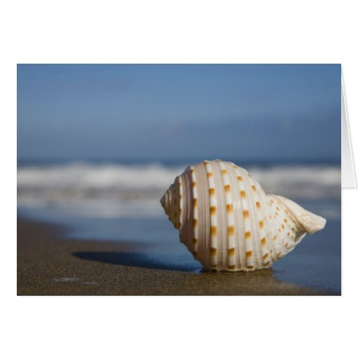 Seashell on the Shore Card | Zazzle