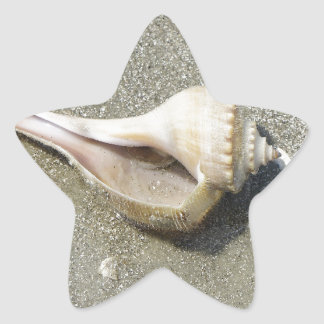 Seashell Calcomania Forma De Estrella Personalizadas