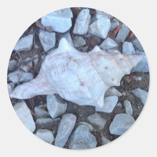 Seashell Pegatina Redonda