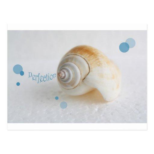 Seashell Perfection Postcards