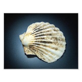 Seashell Art Photo