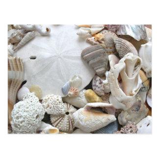 Seashell Photography Blank Postcard
