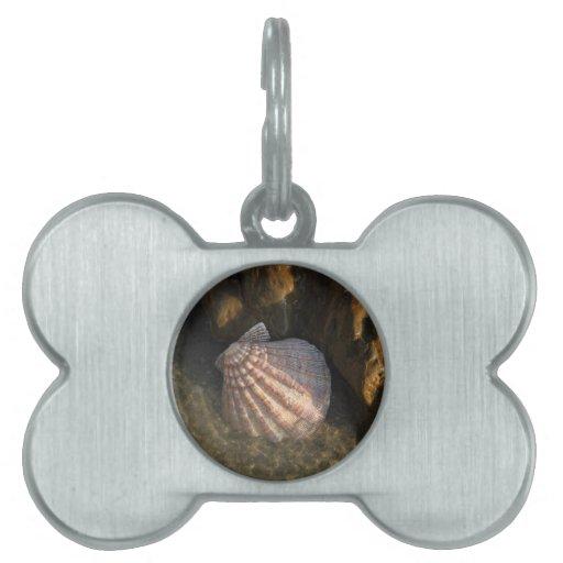 Seashell por una roca placas mascota
