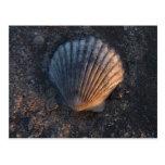 Seashell Post Cards