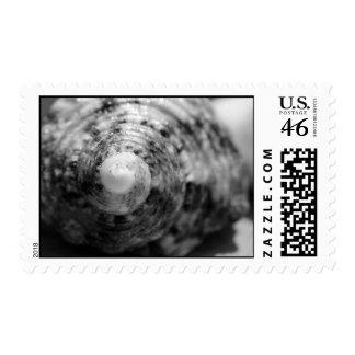 Seashell Postage Stamps