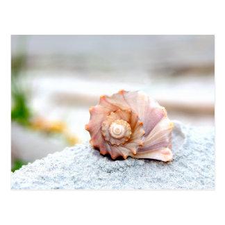Seashell Postcard