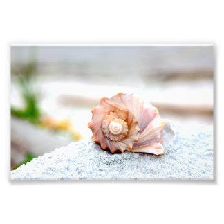 Seashell Print Photo Print