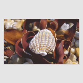 Seashell Rectangular Sticker