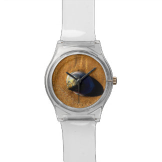 Seashell Relojes