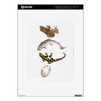 Seashell, Salamander, Salmon iPad 3 Decal