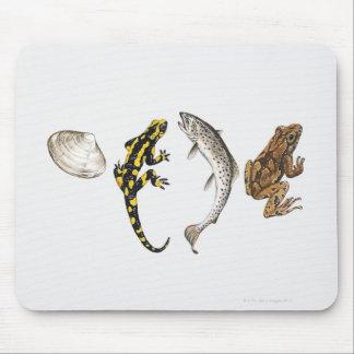 Seashell, Salamander, Salmon Mouse Pad