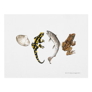 Seashell, Salamander, Salmon Postcard