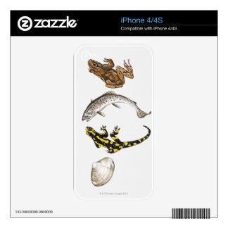 Seashell, Salamander, Salmon Decal For iPhone 4