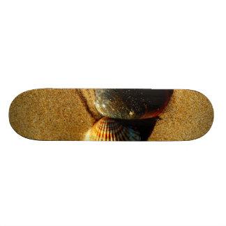 Seashell Skate Board Decks