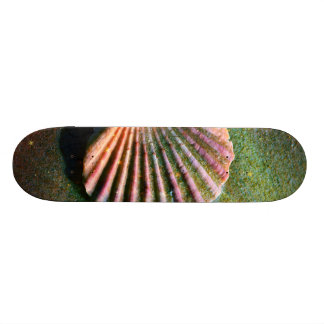Seashell Skate Boards