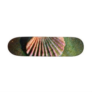 Seashell Skate Deck