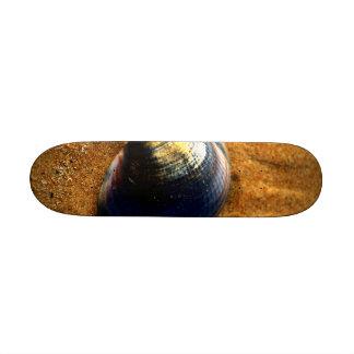 Seashell Skate Decks