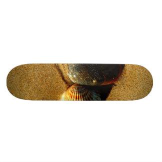 Seashell Skateboard Decks