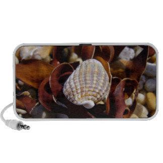 Seashell Notebook Speakers