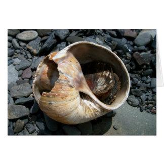 Seashell With Slug Greeting Card