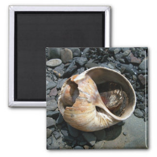 Seashell With Slug Magnet