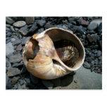 Seashell With Slug Postcard