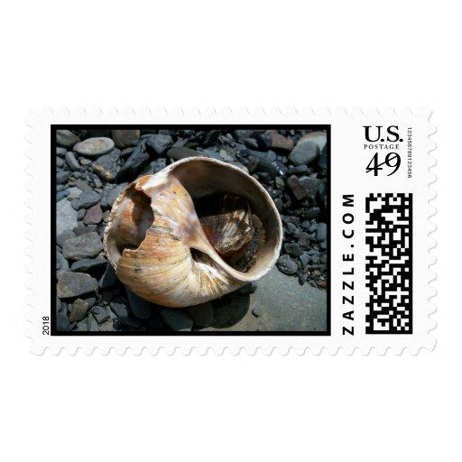 Seashell With Slug Stamp