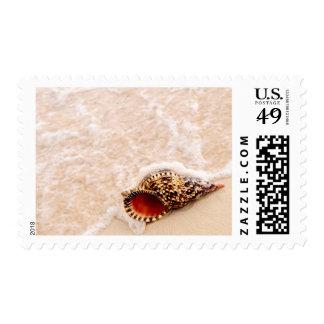 Seashell y ola oceánica sellos