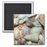 seashells 2 inch square magnet