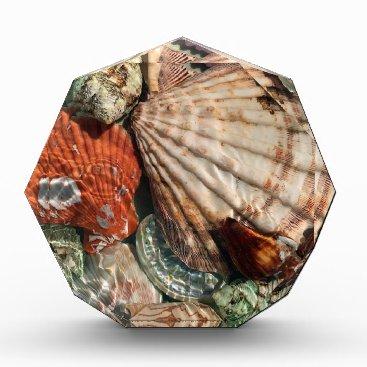 Beach Themed Seashells Acrylic Award