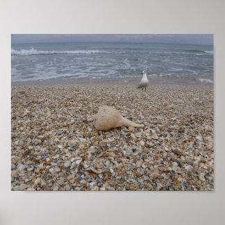 Seashells and Sea Gulls Poster