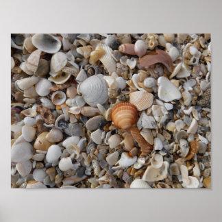 Seashells at the Sea Shore Poster