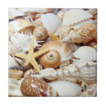 Seashells Azulejo Cuadrado Pequeño