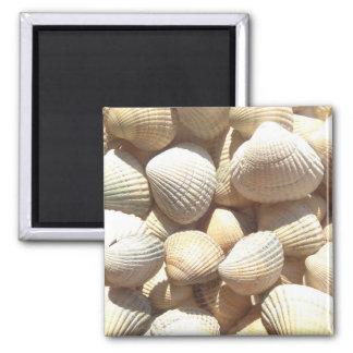 Seashells Beach, Summer Holiday Magnet