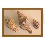 Seashells Blank Card