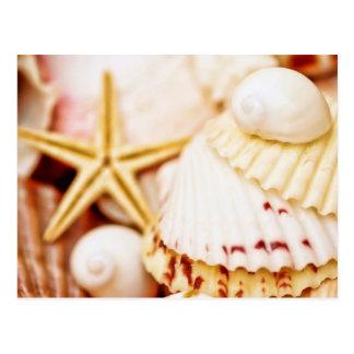 Seashells bonitos tarjetas postales