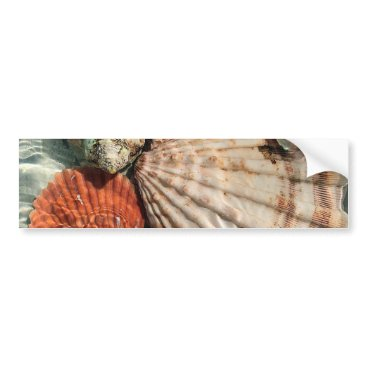 Beach Themed Seashells Bumper Sticker