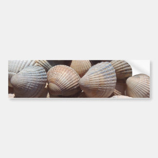 Seashells Bumper Sticker