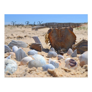 """""""Seashells By The Seashore"""" Postcard"""